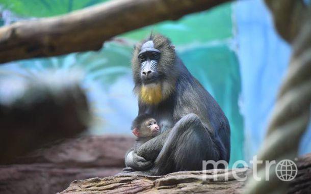 официальный сайт московского зоопарка.