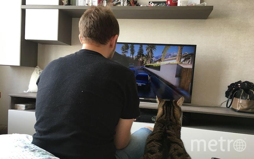 Питомец (кот): Локи Хозяева кота: Алексей и Анита.