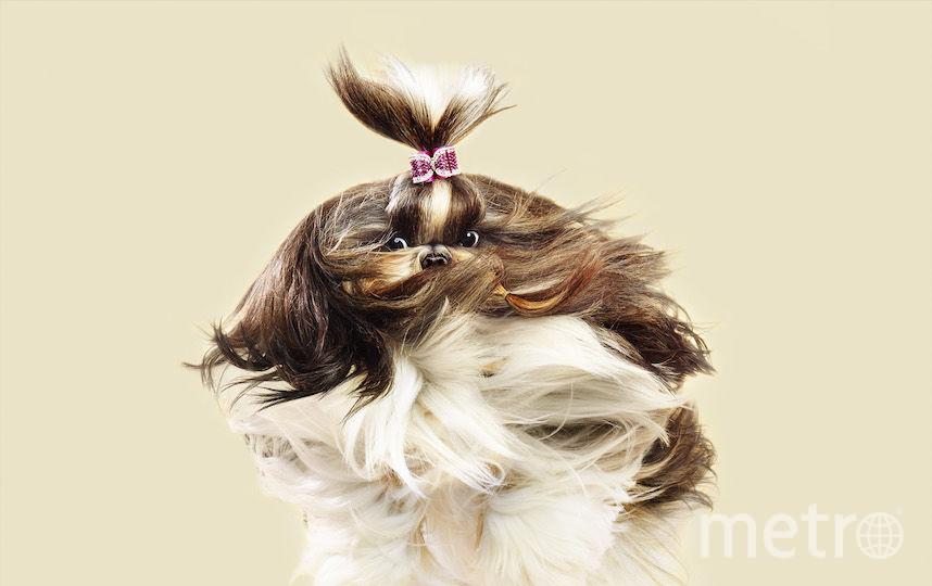 Все - Julia Christe / flyingdogs.info.