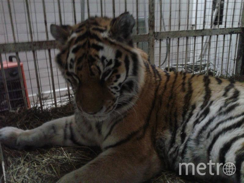 Фото предоставлено Ленинградским зоопарком.