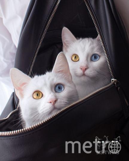 все - https://www.instagram.com/sis.twins/.