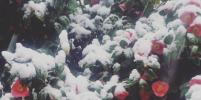 В Японии впервые за 54 года выпал снег в ноябре