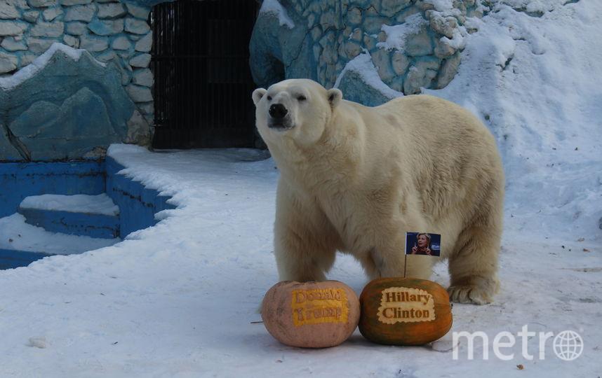 пресс-служба Красноярского зооопарка.