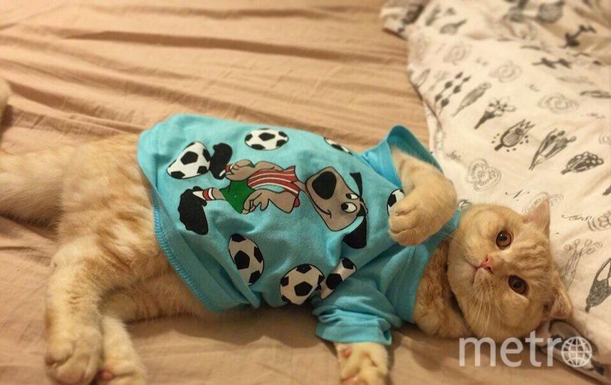 Мама кота – Мамедова Ника.