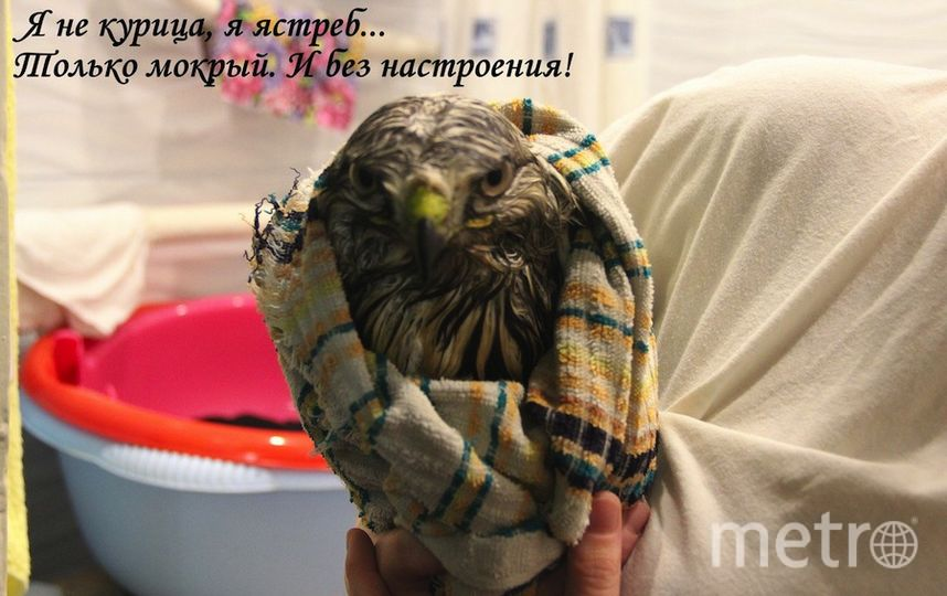 VK/Наталия Демидова.