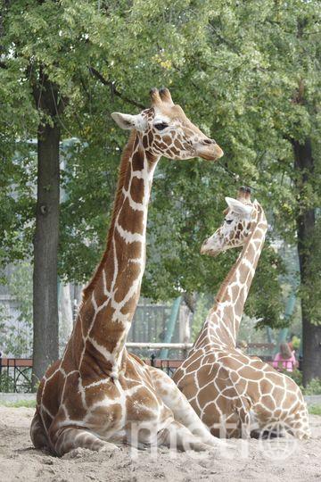 Ленинградский зоопарк .