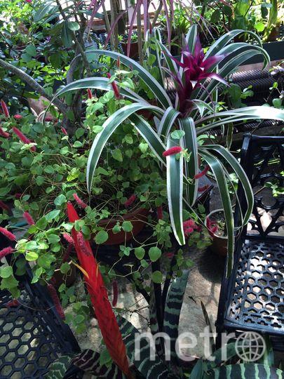 vk.com/botanic_spbu.