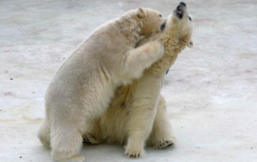 предоставлено Ленинградским зоопарком.