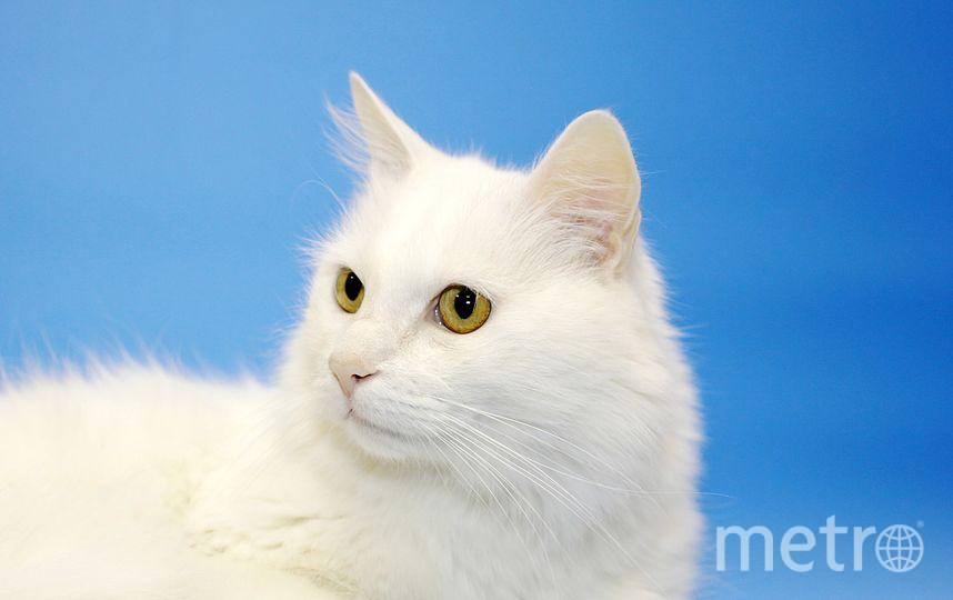 предоставлено Республикой кошек.