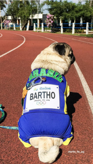 Instagram: @bartho_the_pug.
