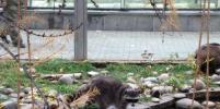 Metro узнало, какие сюрпризы вскоре ждут московских любителей животных