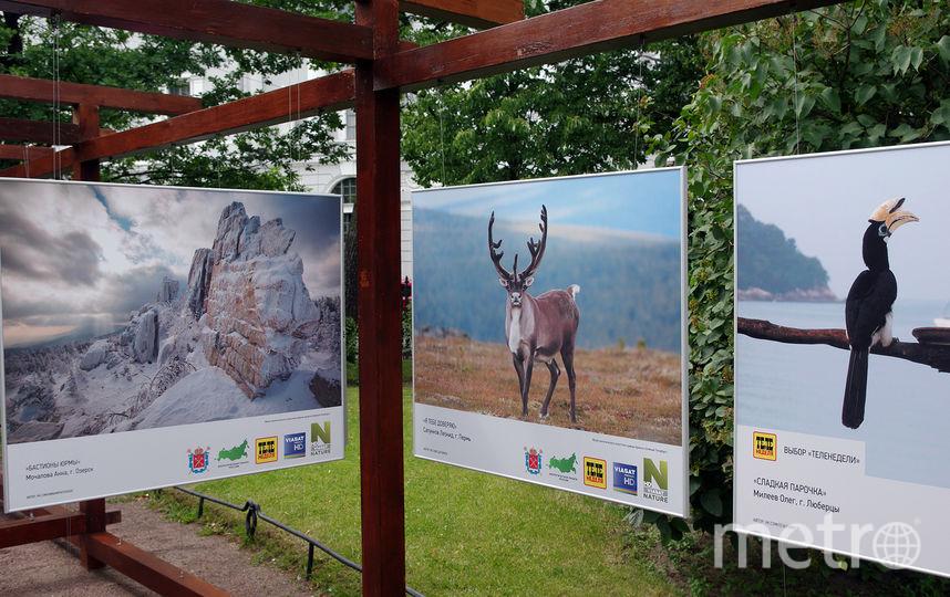 Пресс-центр выставки «Природа смотрит на тебя».