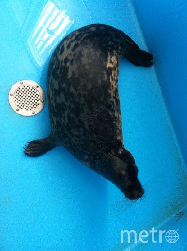 Спасение тюленей / https://vk.com/sealrescue.