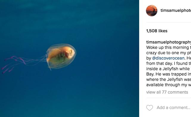 скриншот/Instagram/ timsamuelphotography.