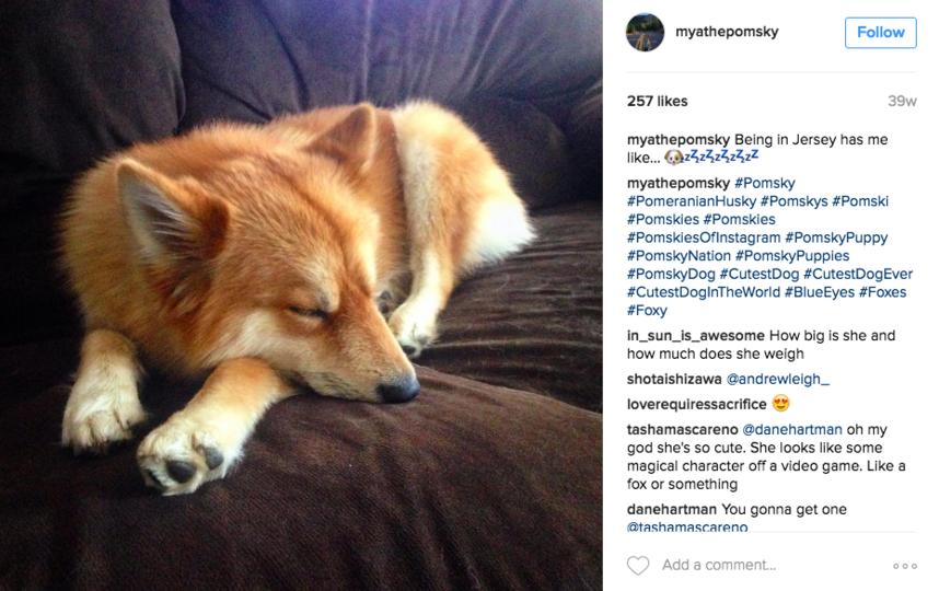все фото - скриншот Instagram/ myathepomsky.