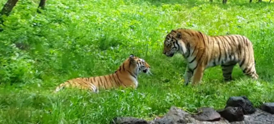Скриншот видео с канала сафари-парка.