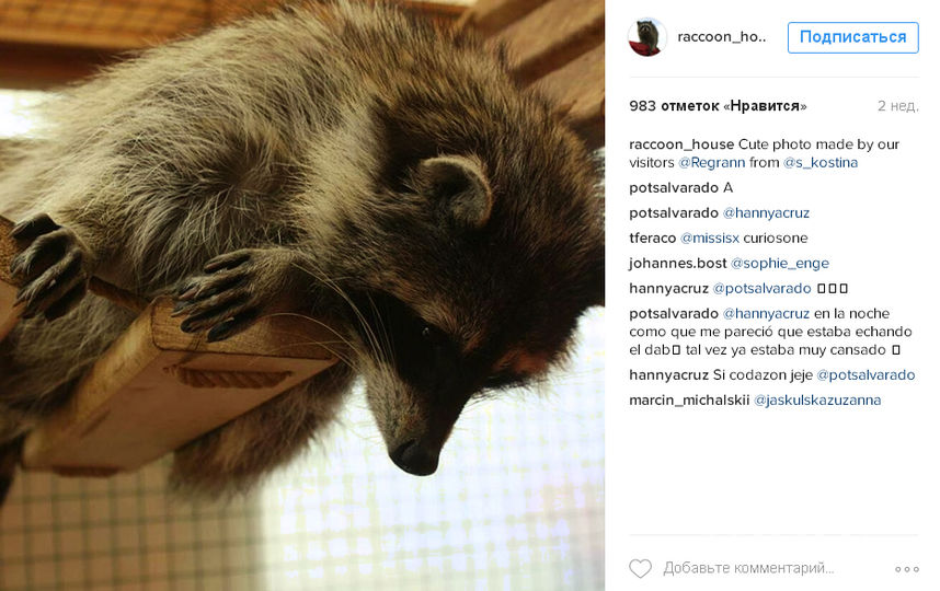 https://www.instagram.com/raccoon_house/.