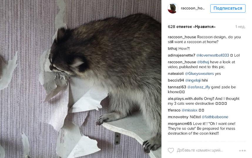https://www.instagram.com/raccoon_house/.