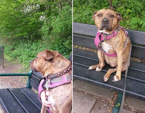 скриншот Facebook/ Freshfields-Animal-Rescue-Freyas-Doggie-Diary.