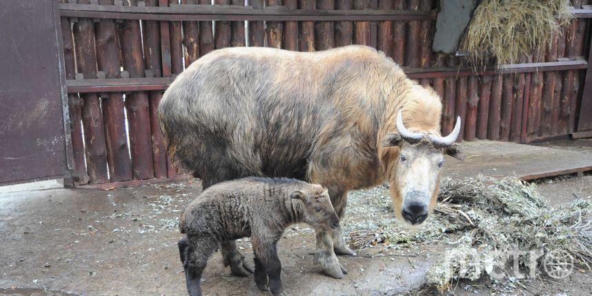педоставлено Московским зоопарком.