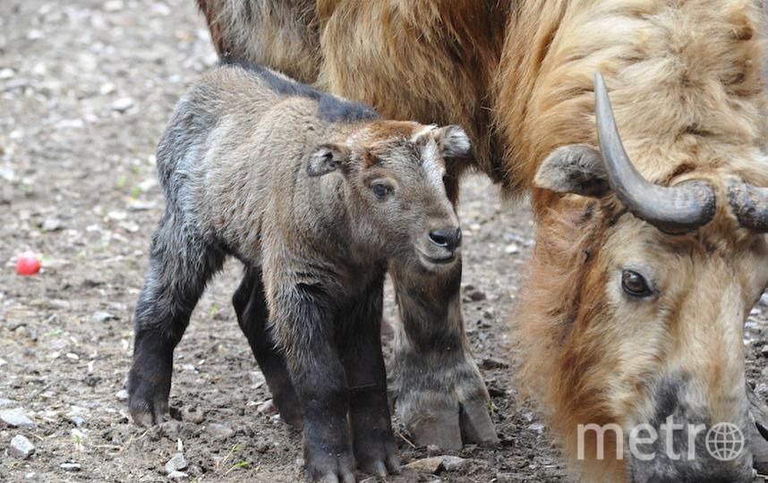 предоставлено Московским зоопарком.