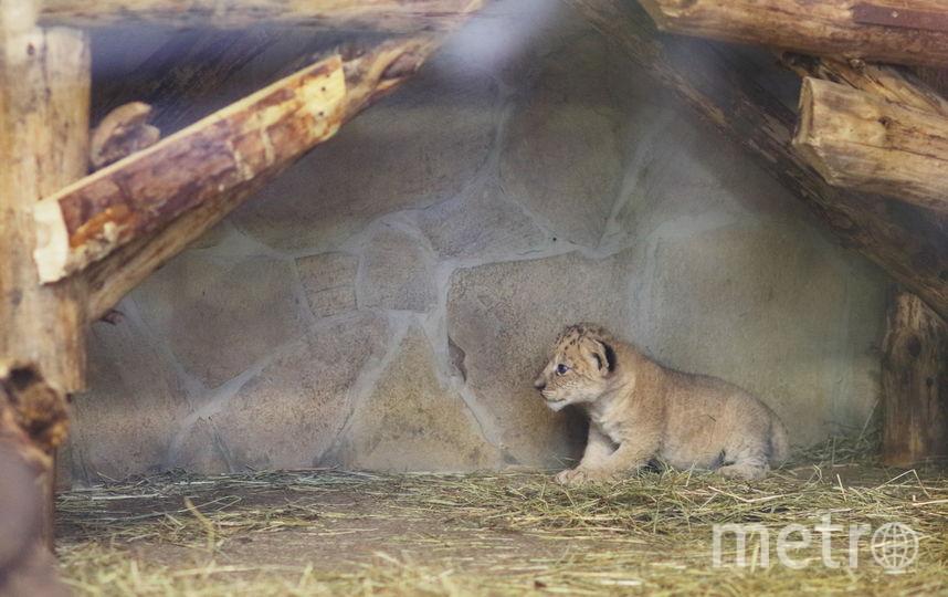Предоставлено пресс-службой зоопарка.