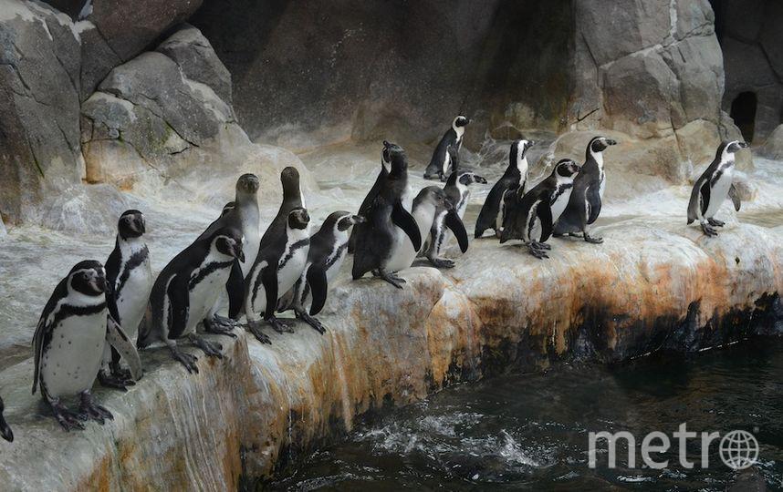 Пресс-служба столичного зоопарка.