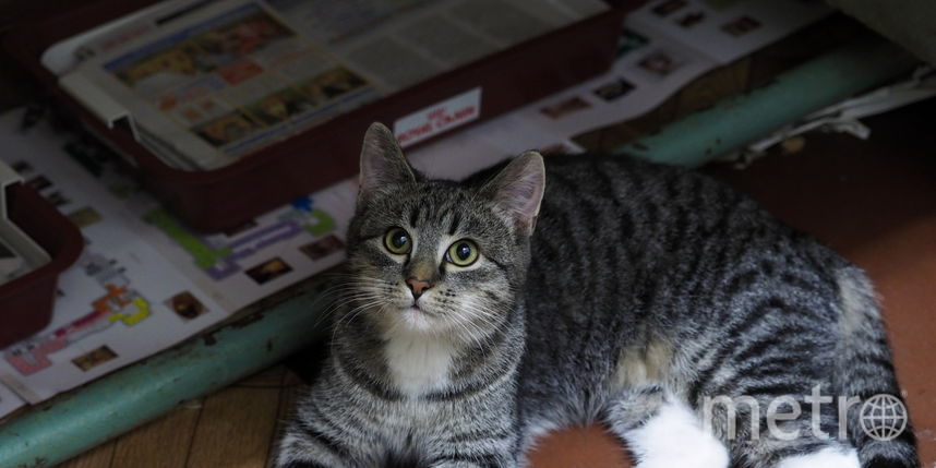 http://hermitagecats.ru.