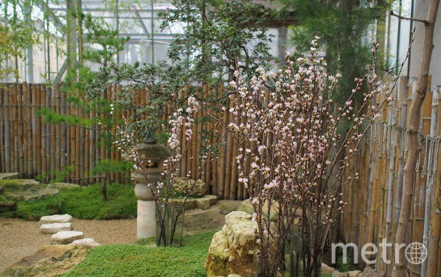 Ботанический сад / Александра Медведева.