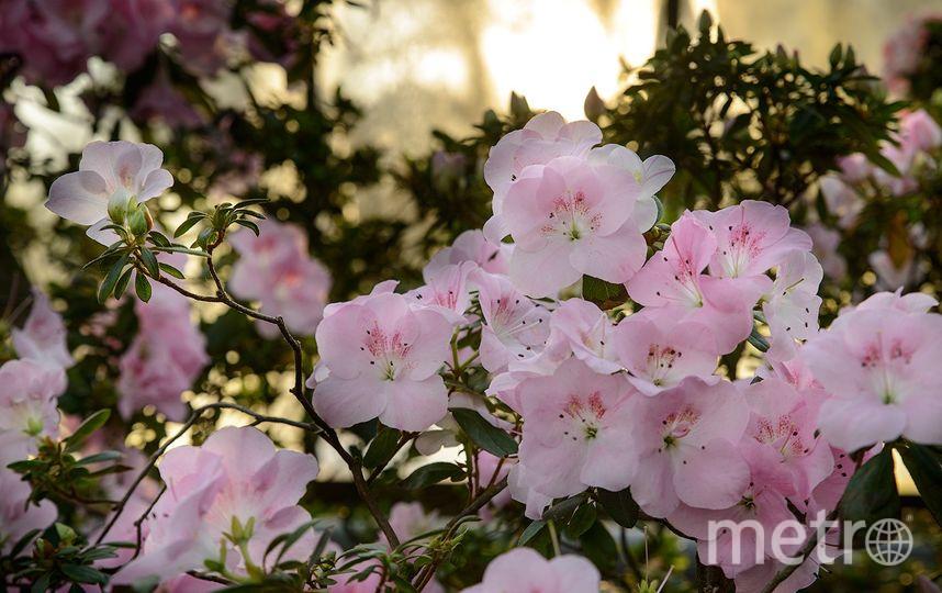 Ботанический сад / vk.com/botsad_spb / Ivan Makarenko.