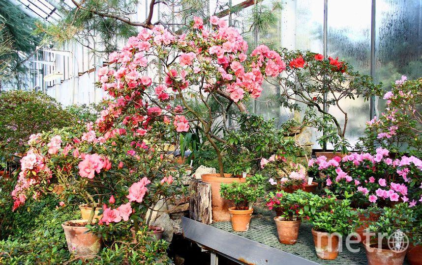 Ботанический сад / vk.com/botsad_spb / Ирина Казакова.