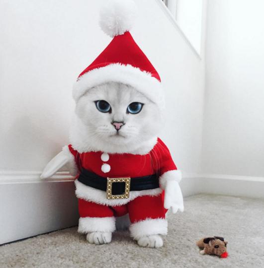 https://www.instagram.com/cobythecat/.