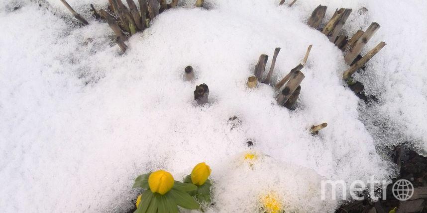 Ботанический сад /vk.com/botsad_spb / .