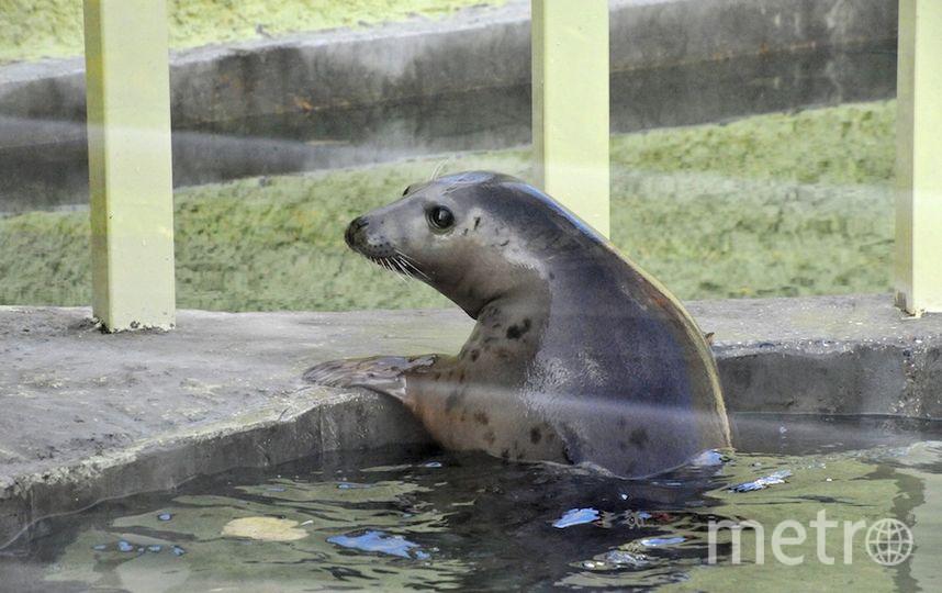 Все фото сайт Московского зоопарка.