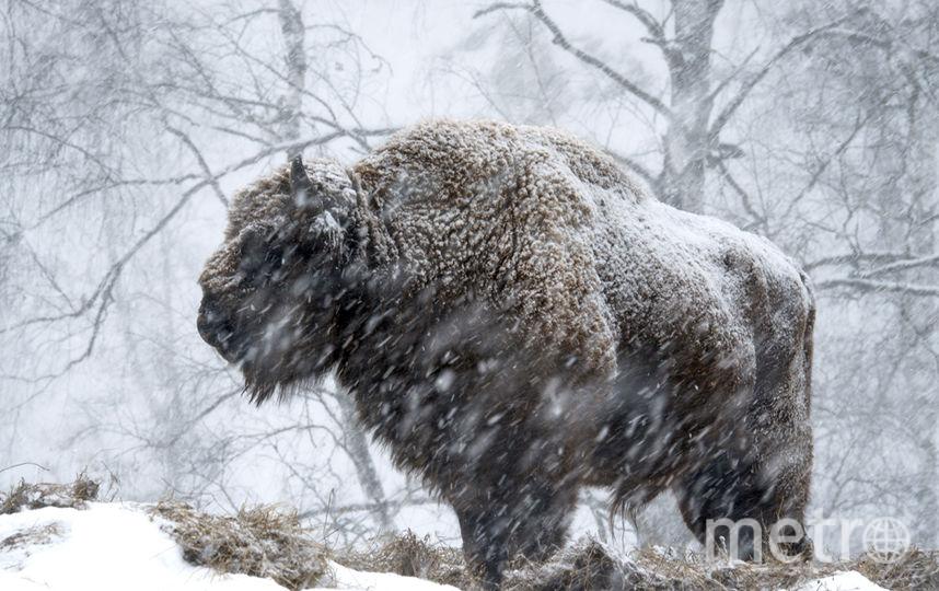 предоставлены журналом National Geographic Россия.