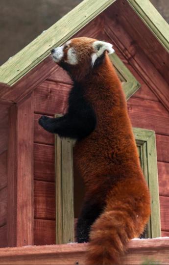 Пресс-служба Московского зоопарка.