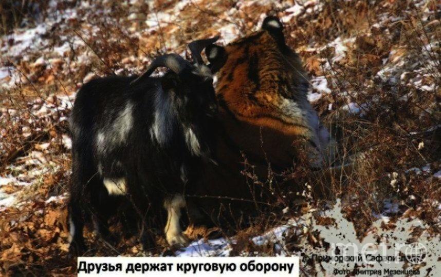скриншот с официального канала приморского сафари-парка на YouTube.