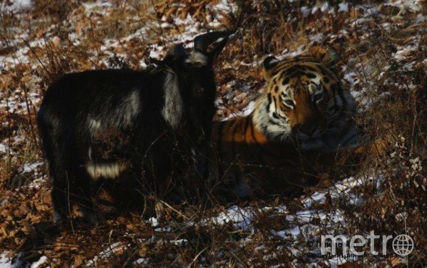 Приморский сафари-парк Дмитрий Мезенцев .