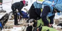 Во Франции устроили гонку на собачьих упряжках