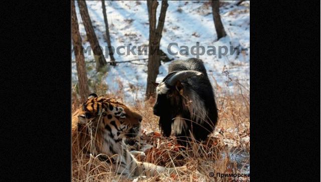 Приморский сафари-парк/Дмитрий Мезенцев .