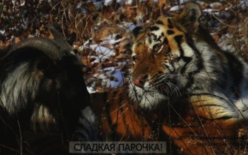Приморский сафари-парк/Дмитрий Мезенцев.