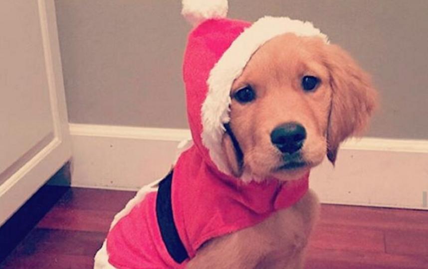 https://www.instagram.com/one_doggy/.