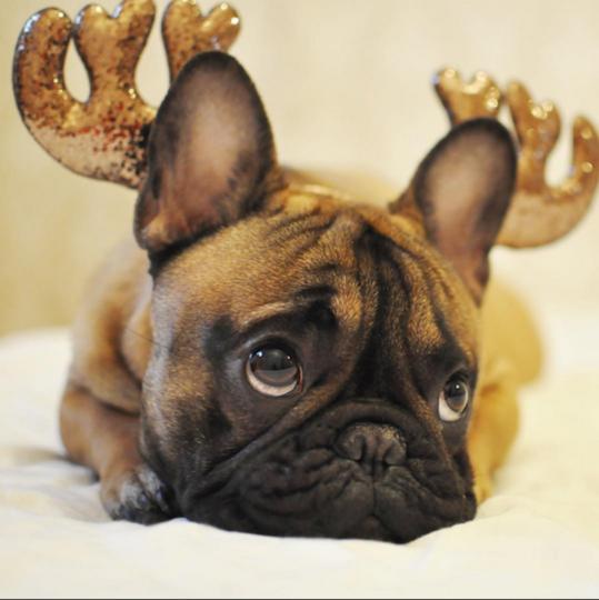 https://www.instagram.com/mr.frenchbulldog/.