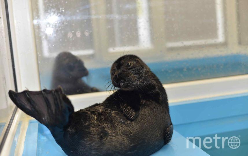 Центр реабилитации морских млекопитающих Ленинградской области / https://vk.com/sealrescue.
