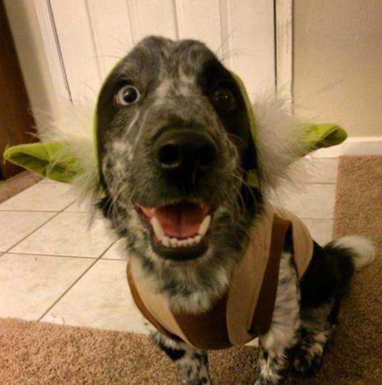 https://www.instagram.com/egon_the_dog/.