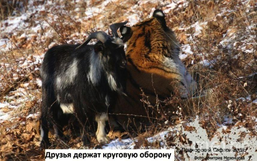 Все: Приморский Сафари-парк, фото Дмитрия Мезенцева.