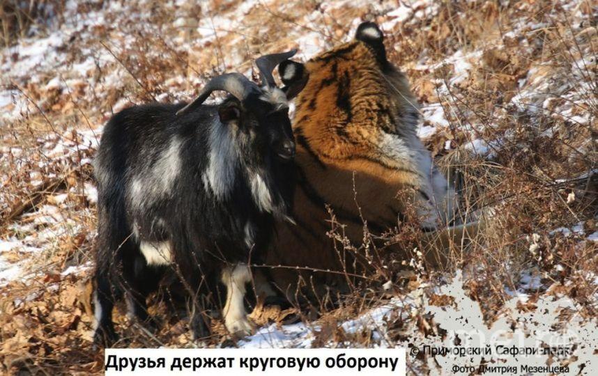 приморский Сафари-парк, фото Дмитрия Мезенцева.