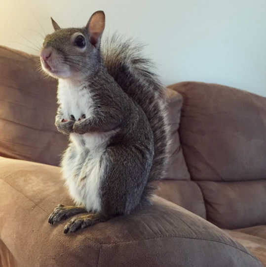 https://www.instagram.com/this_girl_is_a_squirrel/.