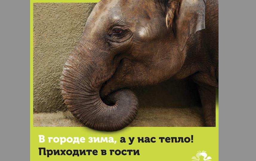 Страница Московского зоопарка в соцсети https://www.facebook.com/MoscowZoo/?fref=ts.