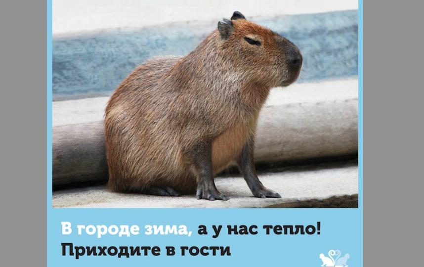 Все страница Московского зоопарка в соцсети https://www.facebook.com/MoscowZoo/?fref=ts.